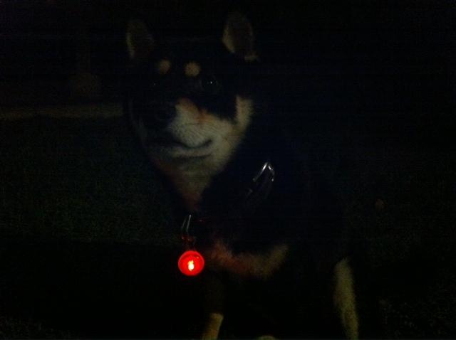 8月18日 夜番犬の_d0171384_23405633.jpg