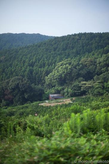 白岩山と大豆_b0253991_821777.jpg