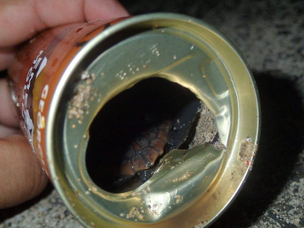 8/16 缶コーヒー_a0010095_1218443.jpg