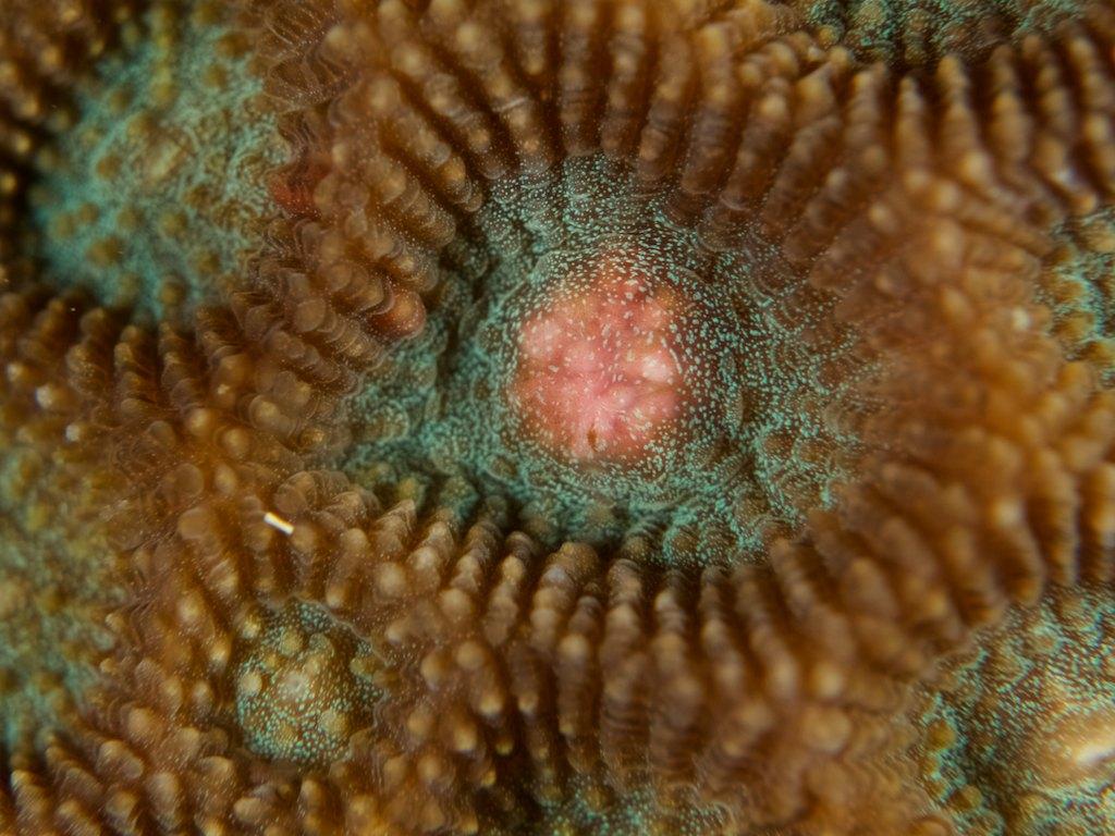 8/8 サンゴの産卵_a0010095_1226581.jpg