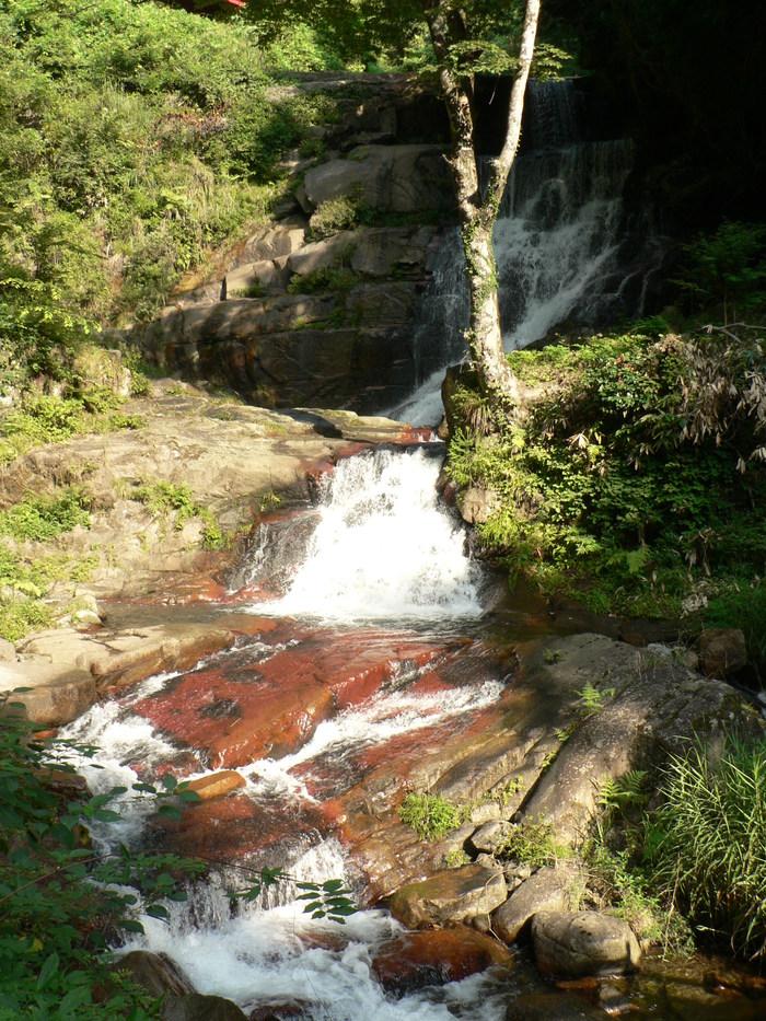 苔岩に咲く イワタバコ_f0219710_11231216.jpg