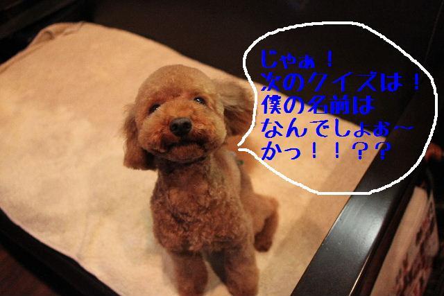 ティーコの好きな。。。_b0130018_0135849.jpg