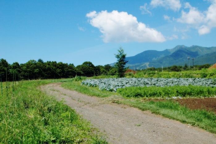 八ヶ岳高原の牧場_f0012718_21304033.jpg