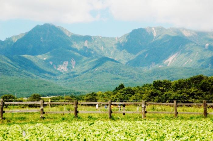 八ヶ岳高原の牧場_f0012718_21494931.jpg