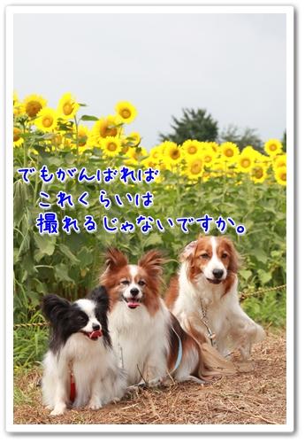 d0013149_12162934.jpg