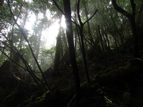 虹、滝、海、沢、森。_b0160957_13404861.jpg