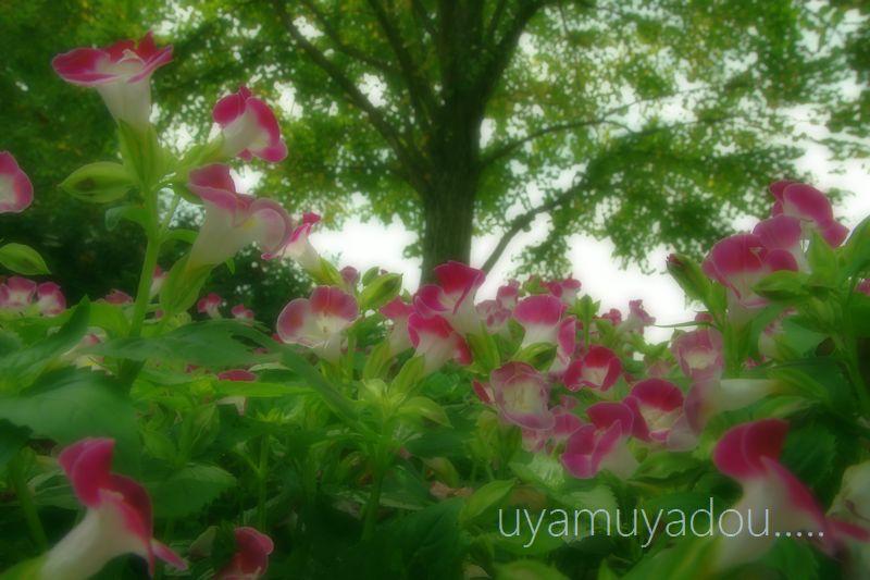 琵琶湖・自転車でおでかけ....._a0157263_22253096.jpg