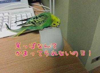 f0196665_23402339.jpg