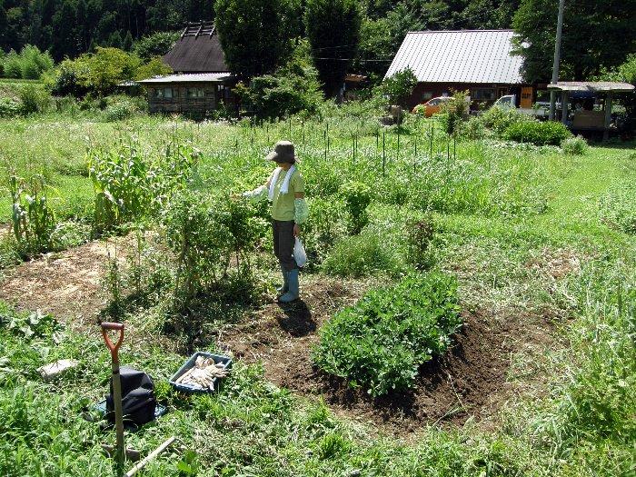 畑で収穫、草刈、土寄せぇ~_c0057390_6574538.jpg
