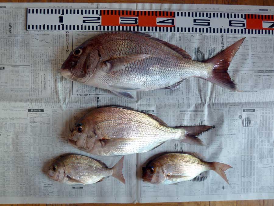 真鯛釣り_f0150893_201475.jpg
