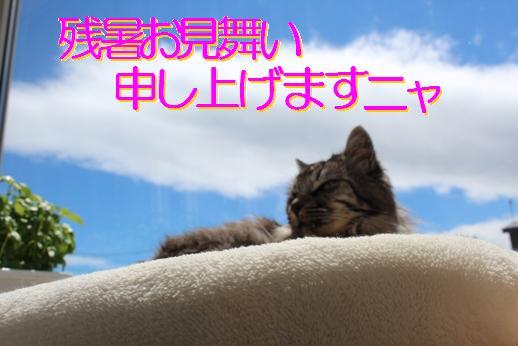 c0213598_2035641.jpg