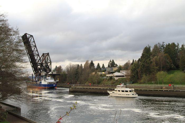 Seattle(6)Chittenden Locksチッテンデン水門_d0148902_23182124.jpg
