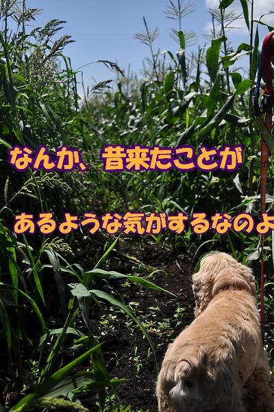 b0067012_23131197.jpg