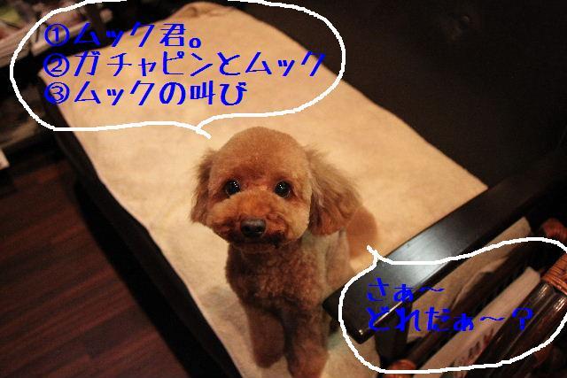 ティーコの好きな。。。_b0130018_014684.jpg