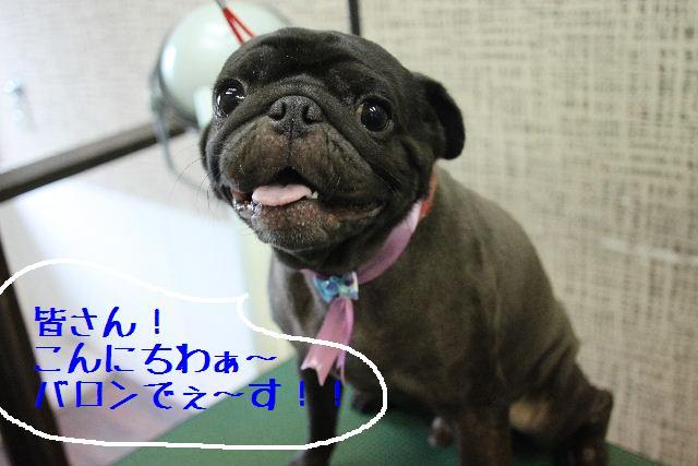 ティーコの好きな。。。_b0130018_0203454.jpg