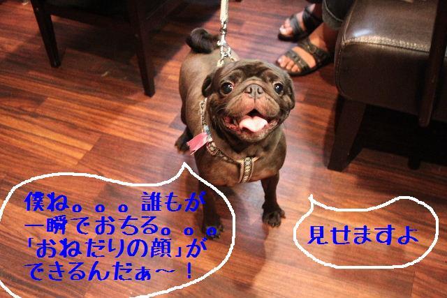 ティーコの好きな。。。_b0130018_0204033.jpg
