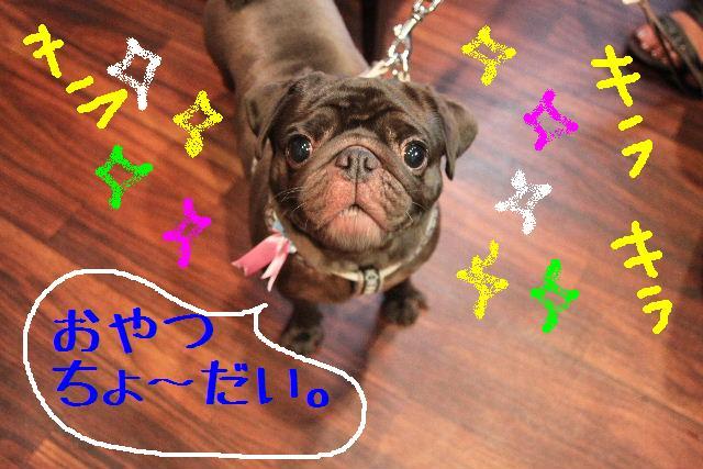ティーコの好きな。。。_b0130018_0204532.jpg