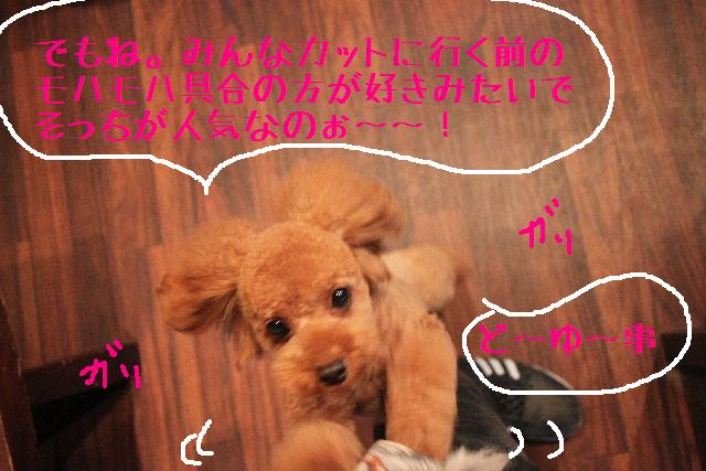 ティーコの好きな。。。_b0130018_0222023.jpg