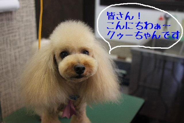 明日はお休みでぇ~す!!_b0130018_23251644.jpg