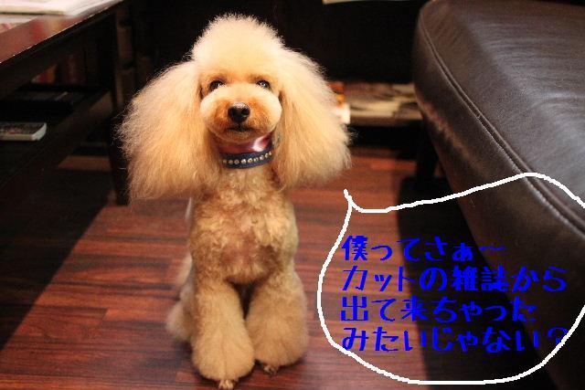 明日はお休みでぇ~す!!_b0130018_23252310.jpg
