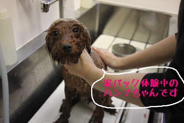 明日はお休みでぇ~す!!_b0130018_23265297.jpg