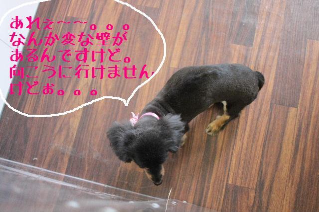 明日はお休みでぇ~す!!_b0130018_23345028.jpg