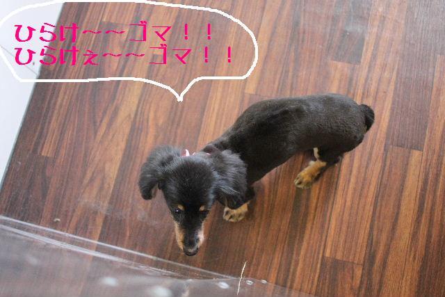 明日はお休みでぇ~す!!_b0130018_23345691.jpg