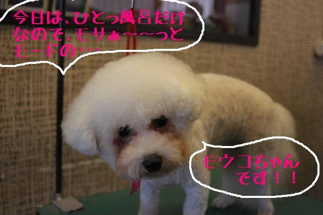 明日はお休みでぇ~す!!_b0130018_23364829.jpg