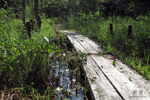 258 赤名湿地 ~ヒツジグサの花~_c0211532_18493957.jpg
