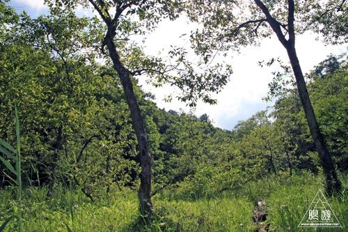258 赤名湿地 ~ヒツジグサの花~_c0211532_1922812.jpg