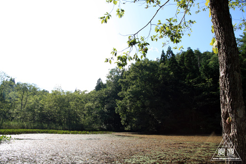258 赤名湿地 ~ヒツジグサの花~_c0211532_19323.jpg