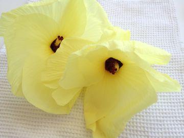 花オクラをサラダで_e0134337_12104271.jpg