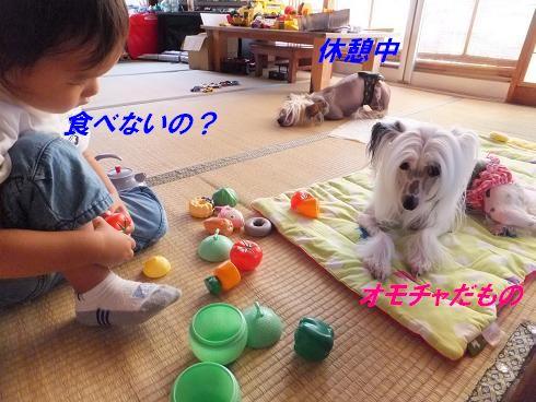 f0179203_7314193.jpg