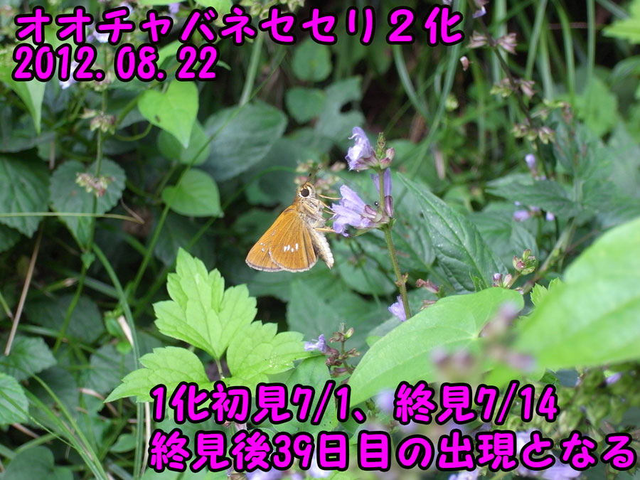 e0253104_23243370.jpg