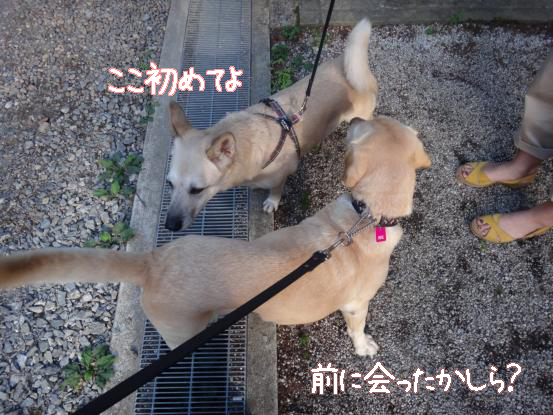 えっちゃんの先輩犬_f0064906_174554100.jpg