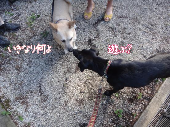 えっちゃんの先輩犬_f0064906_17461699.jpg