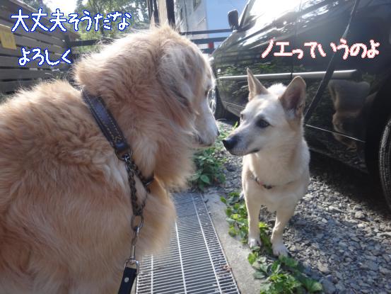 えっちゃんの先輩犬_f0064906_17475138.jpg