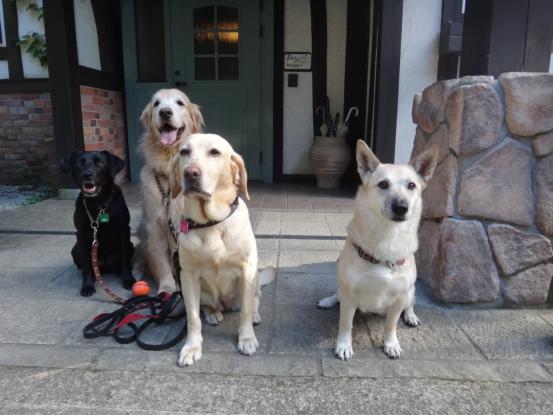 えっちゃんの先輩犬_f0064906_17491456.jpg