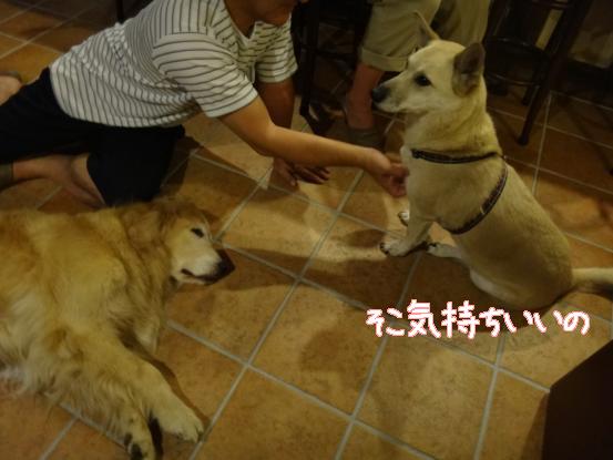 えっちゃんの先輩犬_f0064906_1753179.jpg