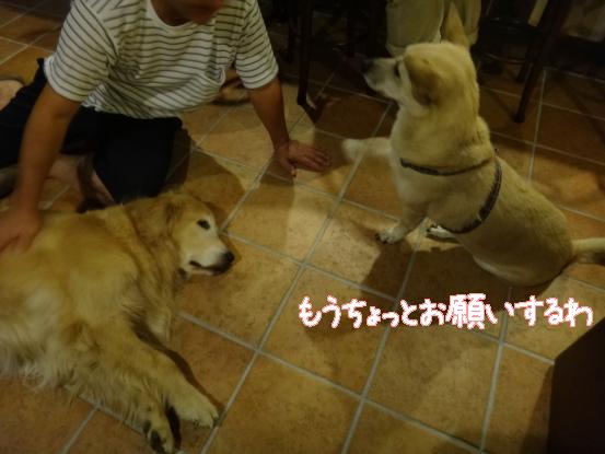 えっちゃんの先輩犬_f0064906_1754018.jpg
