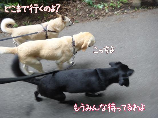 えっちゃんの先輩犬_f0064906_1757851.jpg