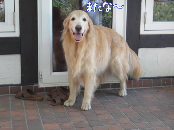 えっちゃんの先輩犬_f0064906_1814228.jpg