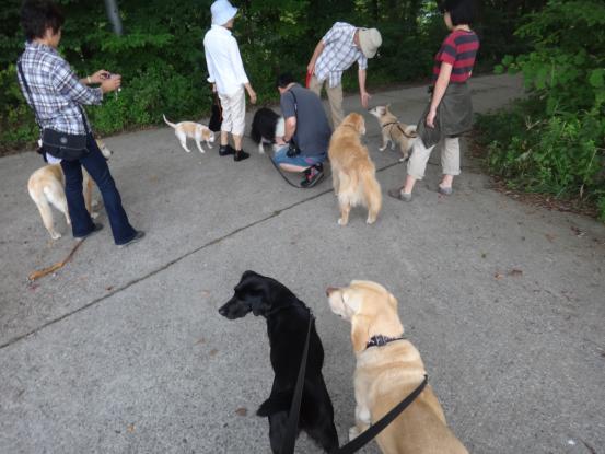 えっちゃんの先輩犬_f0064906_1814749.jpg