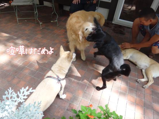 えっちゃんの先輩犬_f0064906_1842068.jpg