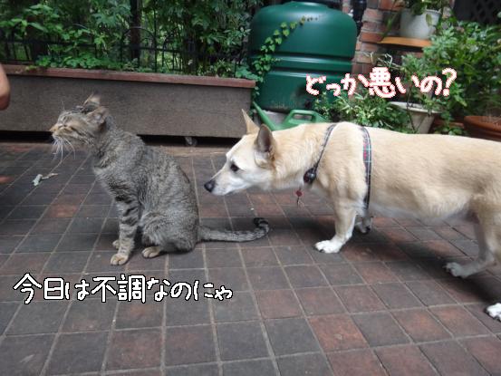 えっちゃんの先輩犬_f0064906_1864380.jpg