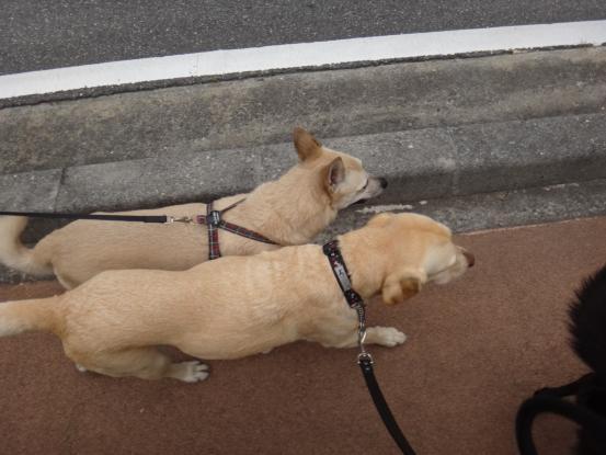 えっちゃんの先輩犬_f0064906_2084518.jpg