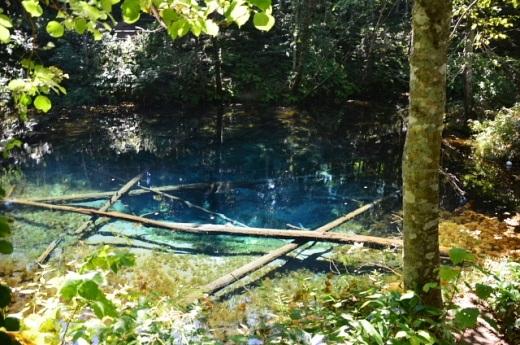 2012年8月22日(水):滝とダムと池、そしてヒマワリとエゾリンドウ[中標津町郷土館]_e0062415_20412923.jpg