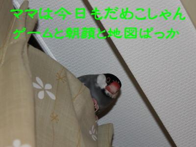 b0158061_21263516.jpg