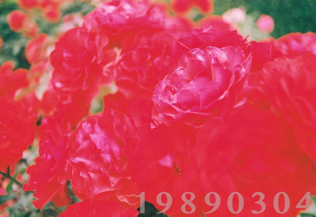 e0239964_21303716.jpg