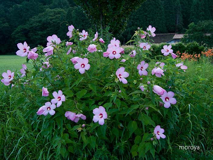 里に咲く_c0085877_7435644.jpg